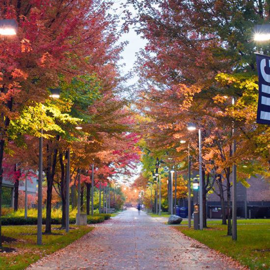 walkway on campus with changing leaves on trees